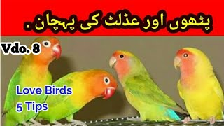 Love Birds Adult or Pathay me faraq: Difference b/w Adult and Young in Urdu/Hindi | By Arham | Vdo.8