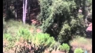 """Un Albero di Trenta Piani - Adriano Celentano - Album """"I Mali del Secolo""""... 05.05.1972..."""