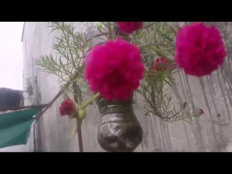 253ЁЯМ┐ЁЯеА рдкреЛрд░реНрдЯреБрд▓рд╛ рдХреЗ рд╕реБрдВрджрд░ рд╣реИрдВрдЧрд┐рдВрдЧ рдмрд╛рдЯрд▓ рдкреНрд▓рд╛рдВрдЯрд░ Mossrose hanging bottle planters