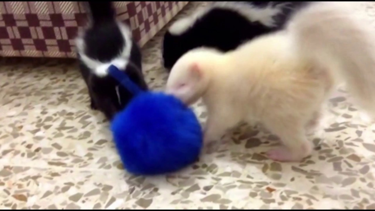 These Baby Skunks Are So Stinkin Cute Youtube