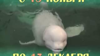 Шоу дельфинов в Солигорске!