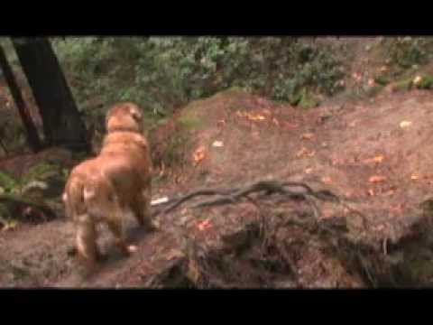 Funny dog bloopers