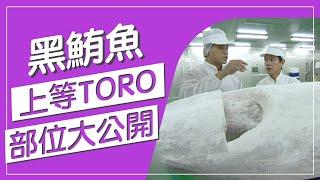 黑鮪魚有分部位!?上等TORO的部位你知道在哪裡嗎?營養攝取能提升我們的免疫力!快來看達人教你看部位!身為饕客的你不能錯過!【水產養殖真有趣】