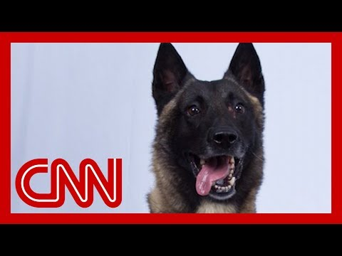See dog who helped chase down world's top terrorist