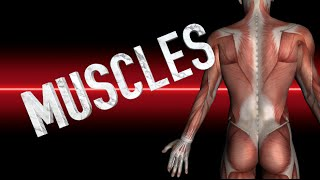 Muscles: Face and Neck - Kinesiology Quiz