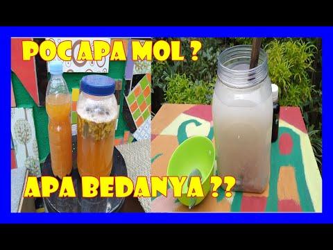 # TIS # CARA MUDAH Membedakan MOL & POC ORGANIK Differences Local MicroOrganism&Liquid Fertilizer