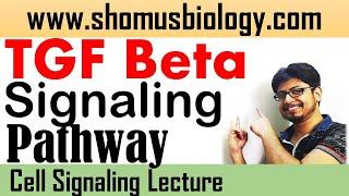 TGF Beta signaling pathway