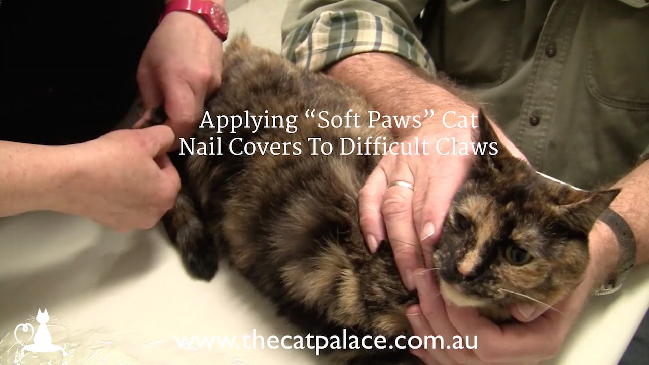 Applying Soft Paws Cat Nail Covers To Difficult Claws