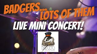 "Website ""Live"" Launch // Mini Concert // Badgers... Lots Of Them"