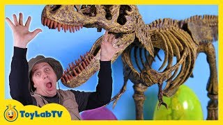 jurassic world dinosaur toy easter eggs hunt surprise toys opening of dinos t rex kids video