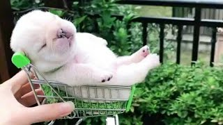 💗Omg! So Cute Pets ♥ Cute Baby Animals Video Compilation #7 💗Cute Moments