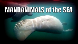 CRAZY MANDANIMALS of the SEA! What ARE some of these creatures?! Mandela Effect Quantum Shift Weird