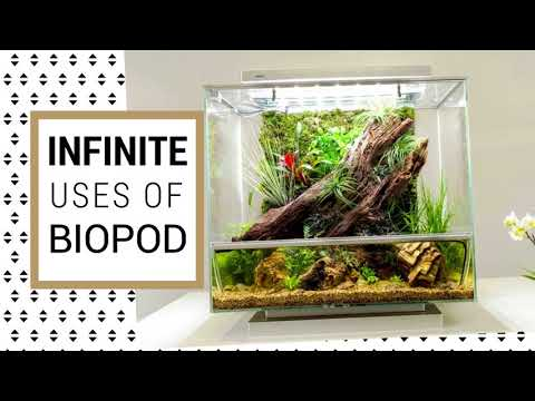 Biopod in India - Grow fresh Organic Vegetables & Herbs in your Kitchen