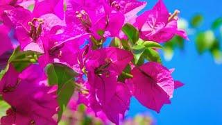 15 Plantas Que Vão Amar Um Cantinho Ensolarado