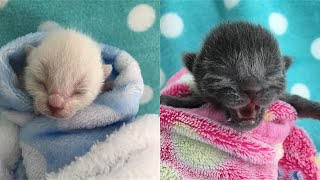 Rescue Stray Kittens Tiny And Fragile Without Mama Cat