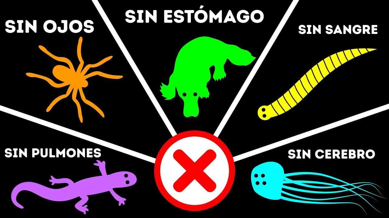 10 Animales Que No Tienen Los órganos Más Importantes Antena92