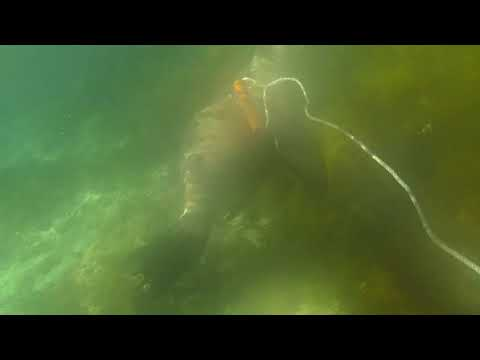 Baird Bay Sea Lion Swim - Mum Travels Oz