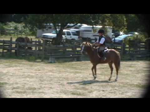 Download Unedited footage Ren Bennett 2 foot Classes at Sunnyside Saddle Club Aug 30 09 No placing