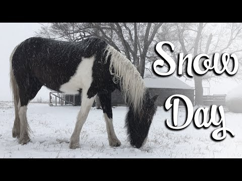 Snow Day on the Homestead