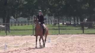 NC Galloping Gus, Nice Dressage Horse, Arabian Gelding For Sale In Texas Thumbnail