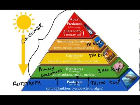 Energy Pyramid - YouTube
