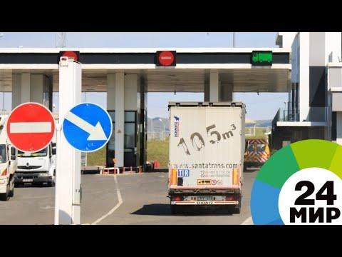 Таможенники пресекли вывоз из Азербайджана редкого сокола - МИР 24