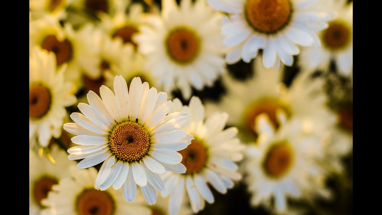 Primavera musica rilassante diprimavera con bellissime for Foto bellissime