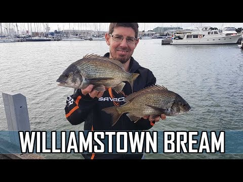 Bream Fishing Williamstown Fishing Ferguson Pier