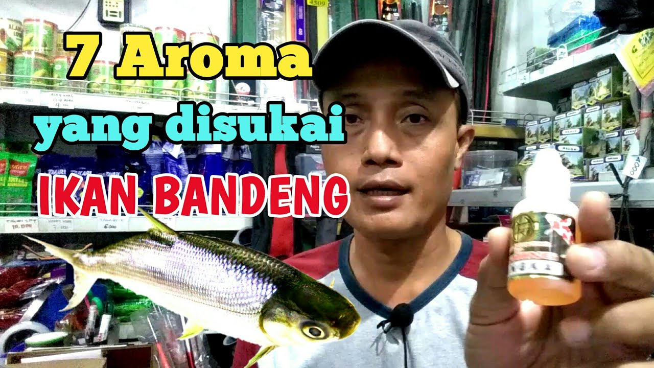 7 Essen Ikan Bandeng Yang Sering Digunakan Youtube