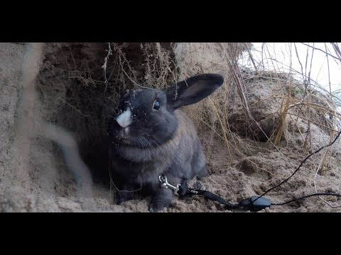 Camping with a Rabbit in Grand Bend - Travel Vlog #2