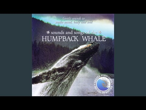 Sounds and Songs of the Humpback Whale
