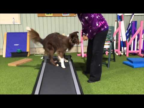 Cross Fit 1 Swagger DogTread Sequence 1