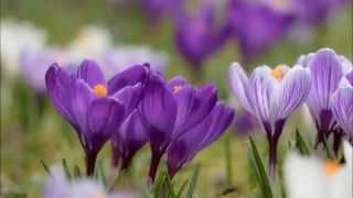 �������� ���� Springtime Спокойная музыка без слов ������