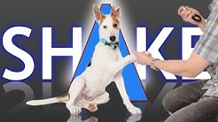 3 Ways to Teach your Dog How to Shake