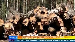 Дело черных лесорубов в Омске получило новый оборот