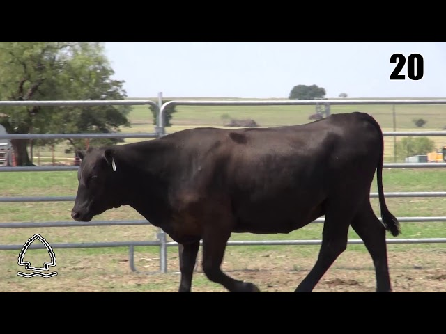 Pearcy Angus Ranch Lot 20