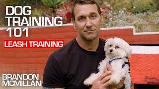 Dog Training 101: Leash Training   Brandon McMillan