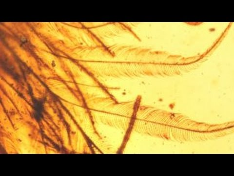 Feathered dinosaur tail discovered in amber