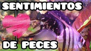 LOS SENTIMIENTOS DE LOS PECES, MUDANZAS DE ACUARIOS, COLOR DE GRAVA, PAPILLAS Y BAJAR PH Y GH