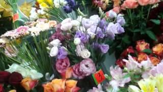 Посещение могилы Анны Герман
