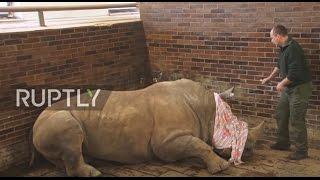 Czech Republic: Rhinos have horns sawn off in Dvur Karlove zoo to deter poachers