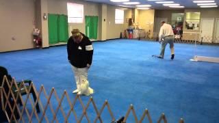 Utility B_ Staten Island Dog Training Club _ Feb 2, 2014