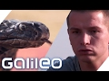 Aaron Troschke lernt die Tricks der Schlangenbeschwörer  Galileo Lunch Break