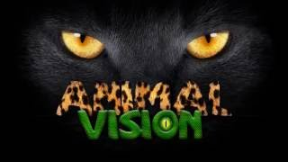 Animal Vision - How animals see the world