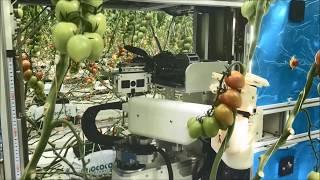 AI-équipé de Tomate Récolte des Robots pour les Exploitations Peuvent Aider à Créer des Emplois