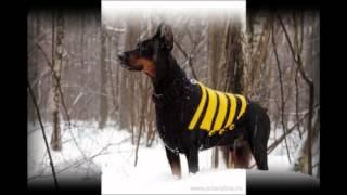 Самая дешевая одежда для собак
