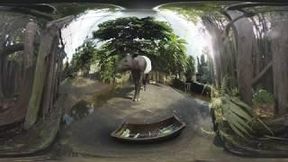 360° Tropenbesuch bei den Tapiren