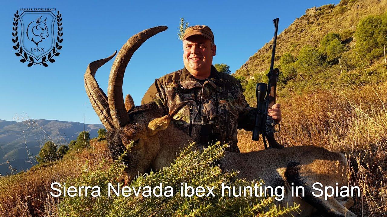 #Sierra Nevada ibex hunting in Spain Europe by www.lynx.tours