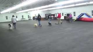 World Class Dog Kennels, Training  Classes Chicago Il.