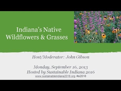 Indiana s Natural Landscape Native Grasses and Wildflowers